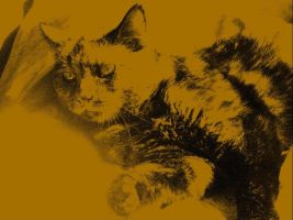 Olive My Cat by Heni1