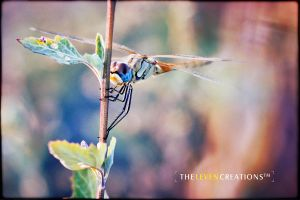 A dragonfly in summer by TheLevenCreations