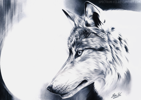 Wolf in black and white by Spectrum-VII