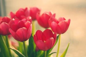Tulips From London by Sabiiz
