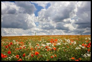 Poppy Field by grimleyfiendish