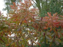 Canadian Fall Colours 59 by Aswang301