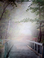 PREMIUM background - Bridge in the forest2 by Euselia