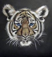 Tiger Face by ADRIANSportraits