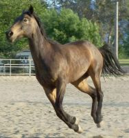 Horse 12 by Kabu-Stock