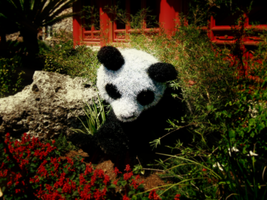 Panda Plant PhotoManip. by Vamrek