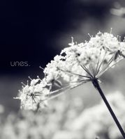 F_6742 by unes