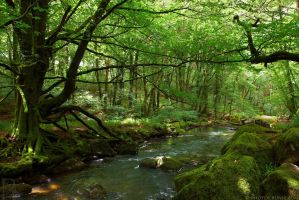 River Fowey at Golitha Falls by runique