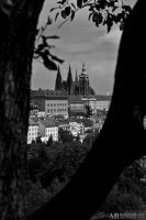 The Castle through the tree by Yupa