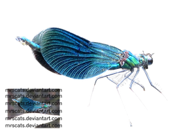 Dragonfly 1 - png by mrscats