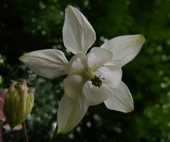 Love for Columbine by Photopathica