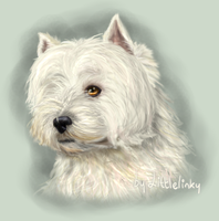 West Highland Terrier - Entry by Littlelinky