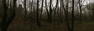 Panoramic of the Forest by LouisTN