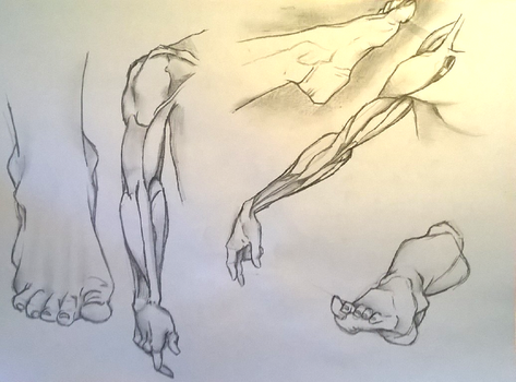 arm and foot study drawing by MartinLafaye