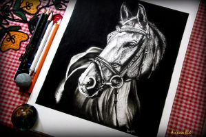 Horse portrait and my drawing table. by Arunava-Art