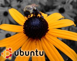 Ubuntu bee by neuroDFOV