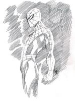 SKETCHY SPIDEY by stalk