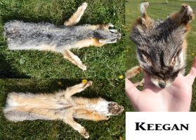 Keegan The Grey Fox SOLD by galianogangster