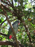Parrot in the tree by israel741