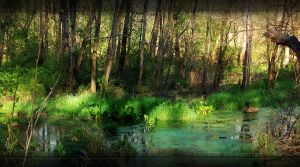 Nature 6 by Robgee