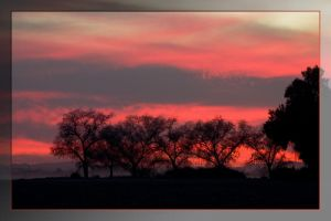 Pink Silhouetted Trees by Delusionist