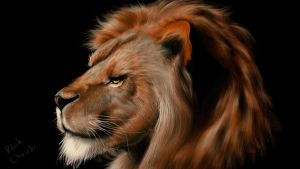 lion study by ceremono