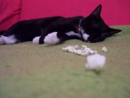 Sleeping Kitty by aesthetique