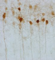 Neurons in the mist by shilaktit