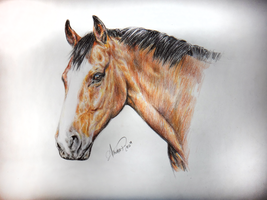 Bay Gelding Commision by Tinkka