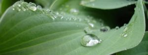 Drops of Water 2304 x 864 by rotbearer