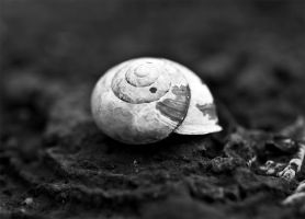 8.52 Snail shell by Musterkatze