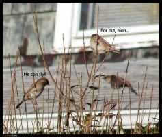 Birds on Weed by Dominick-AR