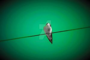 Bird On Line3 by JLP-PHOTOGRAPHY