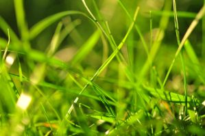Green Green Grass by 12GSuper