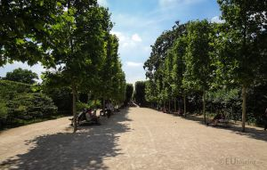 Tree lined path through Jardin des Plantes by EUtouring