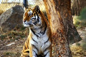 Dis is my tree... by Riphath