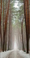magic forest a1 by manroms