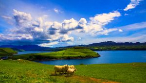 Sheep Enjoying The View, Highlands, Scotland by Raiden316