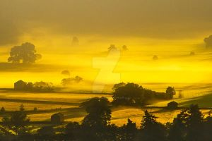 Golden Mist 2 by SandraCockayne