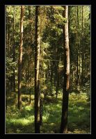 wilde forest by Platonov