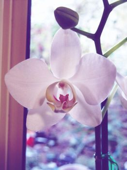 orchid 1 by JamieSketch101