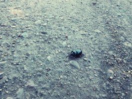 Black Beetle by MistyTang