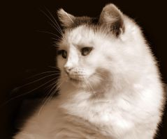 White cat by riviera2008