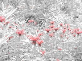 Wild Indian Paint Brushes Filtered by parkins73