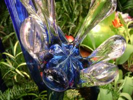 Frog Foot Fiori, 2008 by laura-worldwide