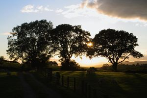 Tree Silhouette by CumbriaCam