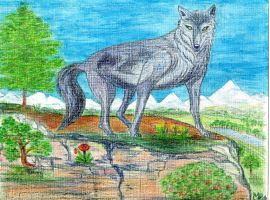 loup au rocher by angeloup