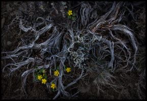 New Life by MarcAdamus