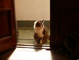 Ivan, the cat by sofmer