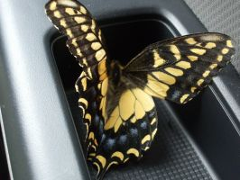 Butterfly goes for a ride by Eris-stock